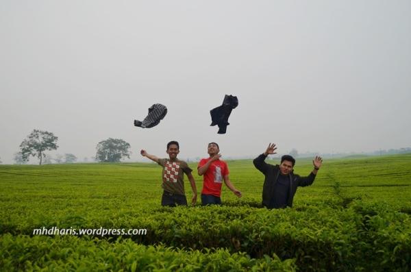 kebun teh sidamanik 4
